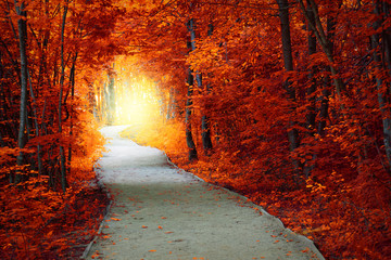 Fantastic Autumn forest with path and magical light