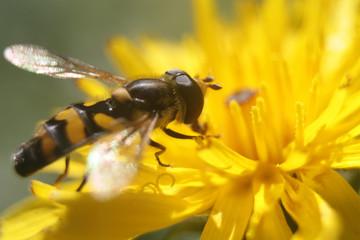 красивое насекомое на желтом цветке