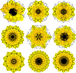 Set of stylized vector sunflowers, collection of design elements