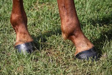 Horse feet closeup