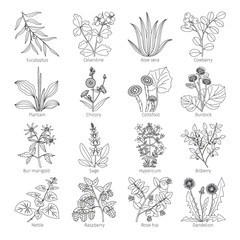 Medicine plants and herbs on white collection vector illustration