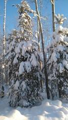 frost around