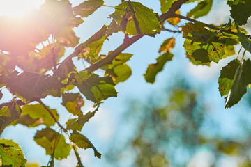 Photo of leaves in sunshine with light