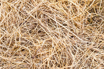 Hay texture background close up