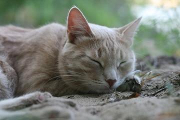 Персиковый котик сладко спит на песке