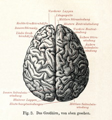 Human brain viewed from above (from Meyers Lexikon, 1895, 7 vol.)