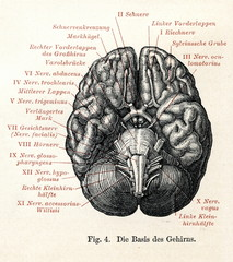Human brain viewed from below (from Meyers Lexikon, 1895, 7 vol.)