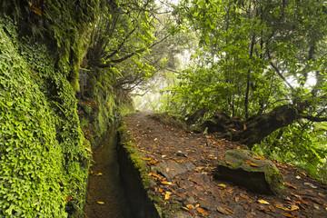 Footpath down the levada on Madeira island. Caldeirao Verde, Madeira, Portugal
