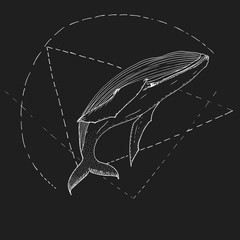 Hand drawn vector whale, graphic illustration