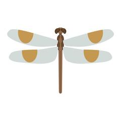 Dragonfly vector illustration.
