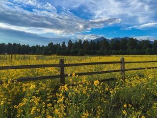 Bright summer wildflowers below a mountain range