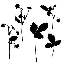 Vector set of drawing plants silhouettes