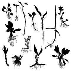Vector set of drawing plants silhouettes with roots