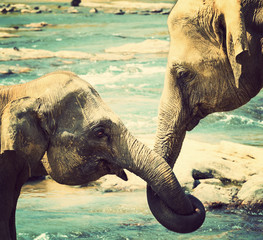 kissing Elephant love