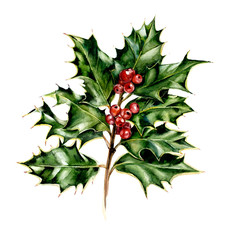 Holly. Branch. New Year's and Christmas motive. Hand drawn watercolor illustration.