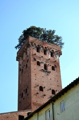 Tower Guinigi in Lucca, Tuscany, central Italy. Unesco site