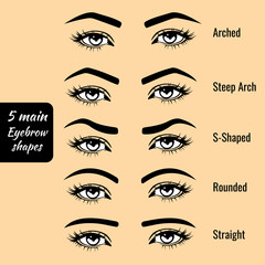 Basic eyebrow shape types vector illustration