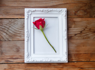 The white frame and red rose