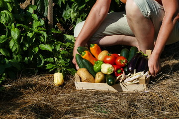 Hands holding crate with mixed vegetables on hay