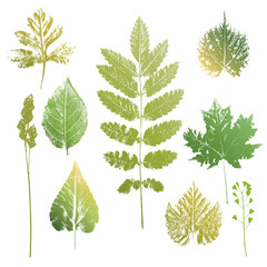 Collection of leaves and grass imprints