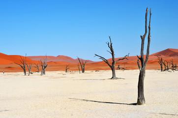 Fototapete - Deadvlei, Sossusvlei. Namibia