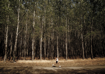 An athletic woman runs along a dirt path in front of rows of trees planted for harvest.