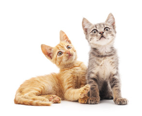 Two kittens.