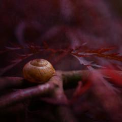 Snail on branch, close-up