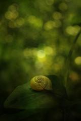 Snail on leaf, close-up