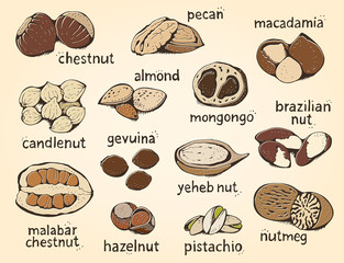 Nuts vector set, big color collection