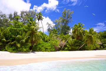 Wall Mural - Tropical white sand beach with palms in Seychelles, Mahe Island