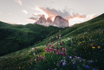 Mountain peaks with flowers, low angle view