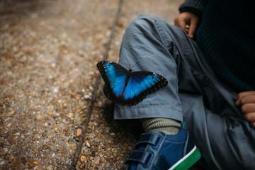 Blue butterfly on child's leg