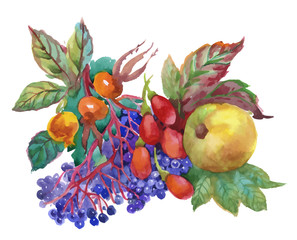 Autumn watercolor illustration with dogwood, apple and other fruits isolated on white background.
