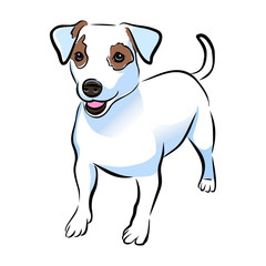 Vector closeup portrait of cute Jack russel terrier breed puppy isolated on white background. Shorthair small-sized little terrier dog. Hand drawn sweet home pet. Greeting card design. Clip art