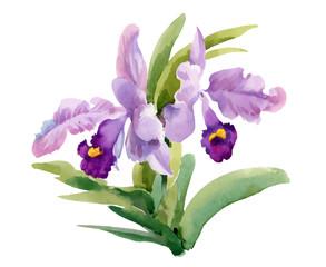 Watercolor blooming iris flowers illustration