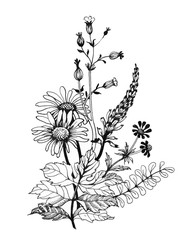 Vintage monochrome wildflowers, watercolor illustration on white background