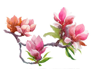 Watercolor Summer blooming pink magnolia flowers.