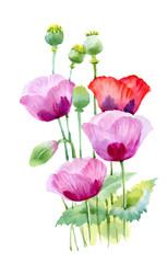 Beautiful watercolor blooming poppy flowers.