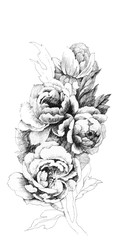 Summer garden peony flowers illustration.