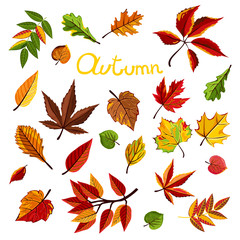 Autumn leaves collection vector illustration. Hand drawn autumn leaves in cartoon style. Design elements.