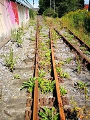 Mauer mit bunten Graffiti an einer stillgelegten Bahnlinie mit rostigen Gleisen in Münster in Westfalen