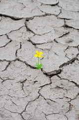 flower growing on the dried and cracked ground