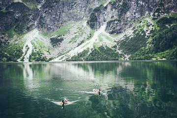 ducks in mountains lake
