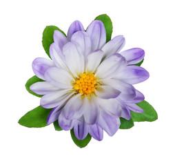 Wild flower light blue on a white background