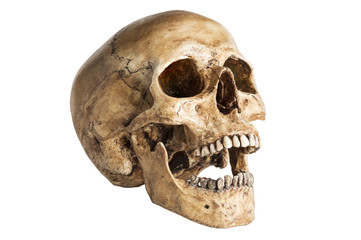 the angle skull model in open the mouth pose isolated on white background