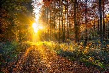 Foto auf Gartenposter Straße im Wald Wald im Herbst