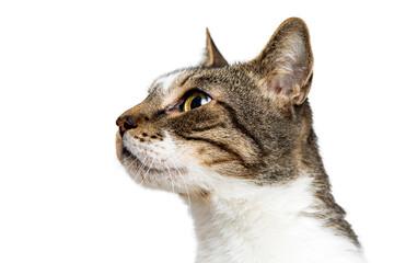 Closeup Portrait Cat Looking Side