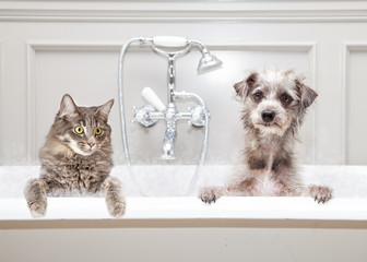 Dog and Cat in Bathtub Together