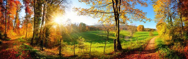 Poster Road in forest Zauberhafte Landschaft im Herbst: sonniges Panorama von ländlicher Idylle